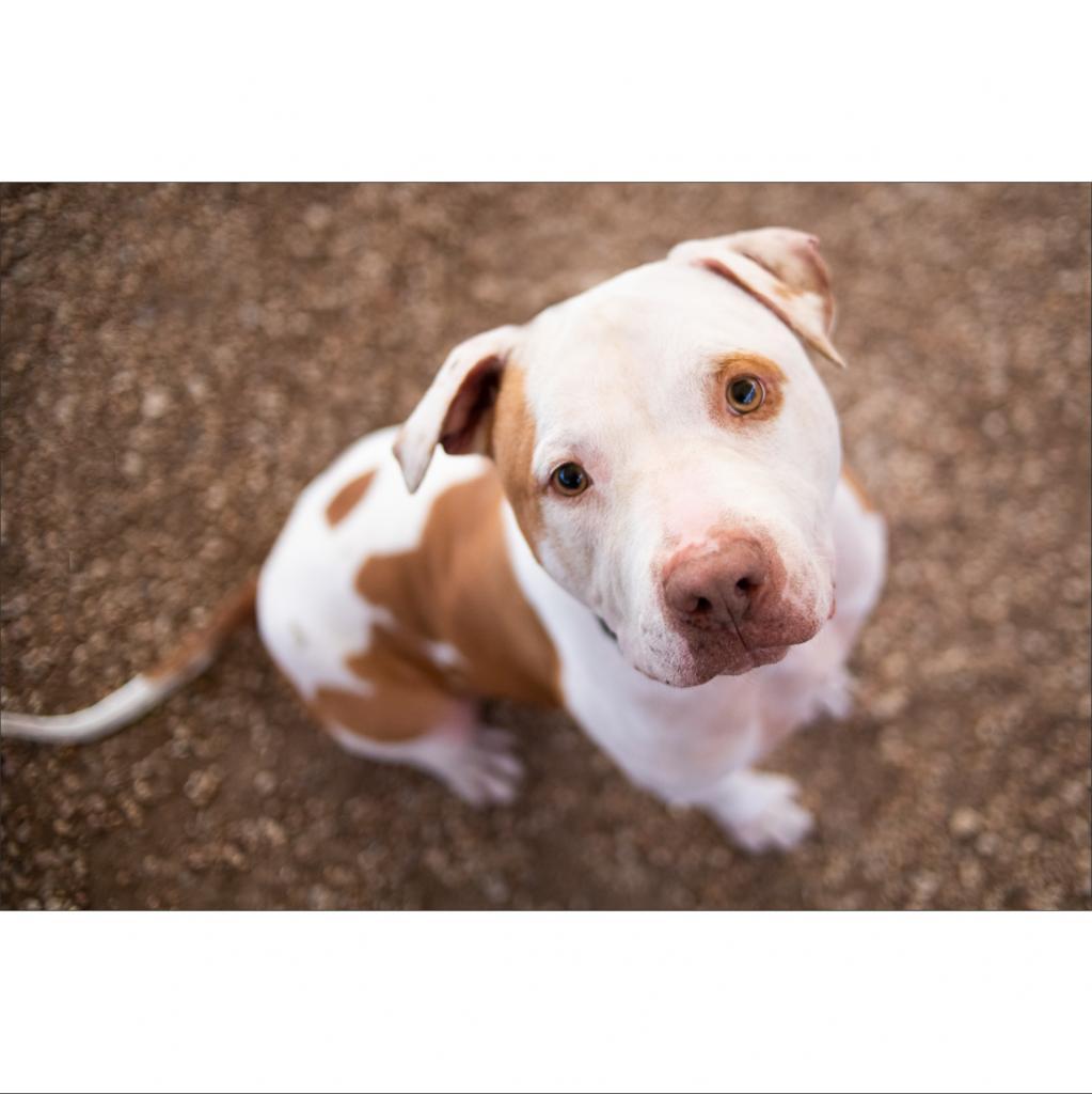 https://www.shelterluv.com/sites/default/files/animal_pics/464/2019/02/13/01/20190213012838.png