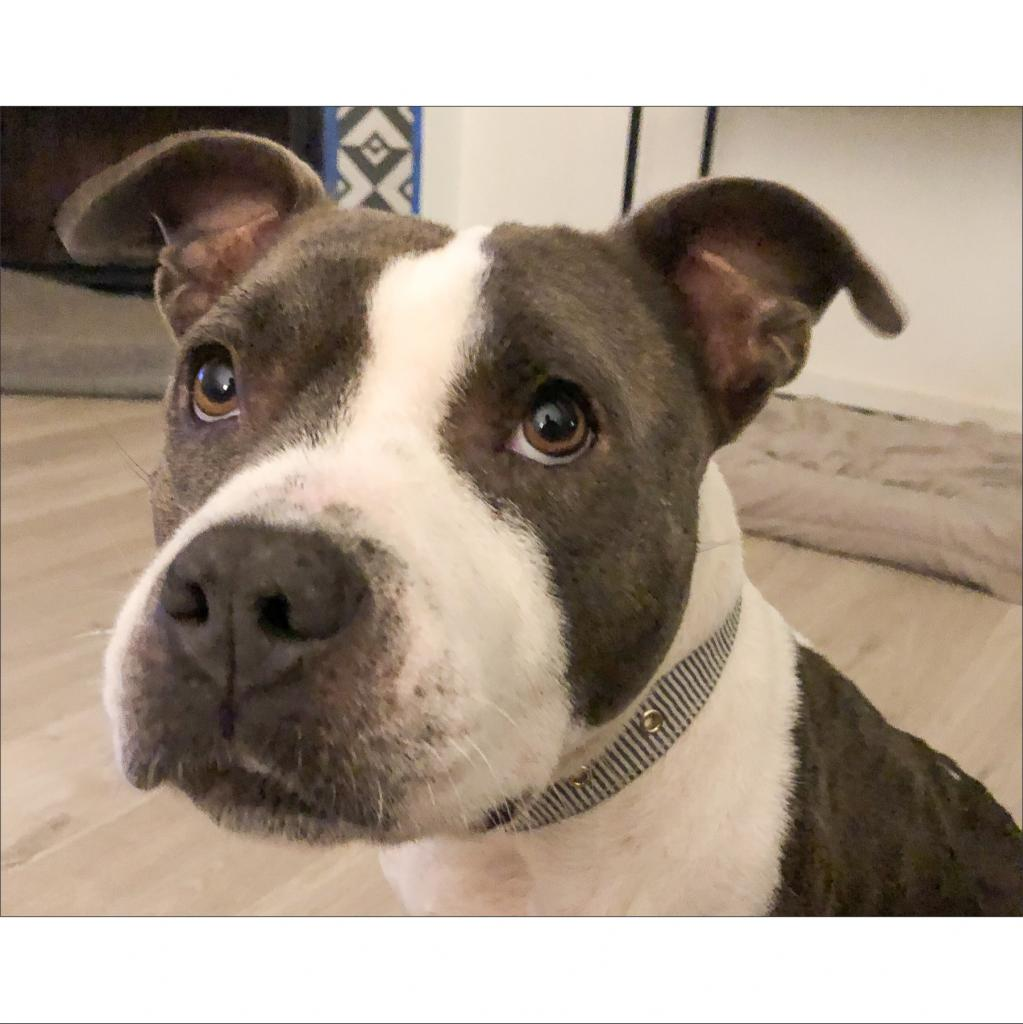 https://www.shelterluv.com/sites/default/files/animal_pics/464/2019/02/13/21/20190213214836.png