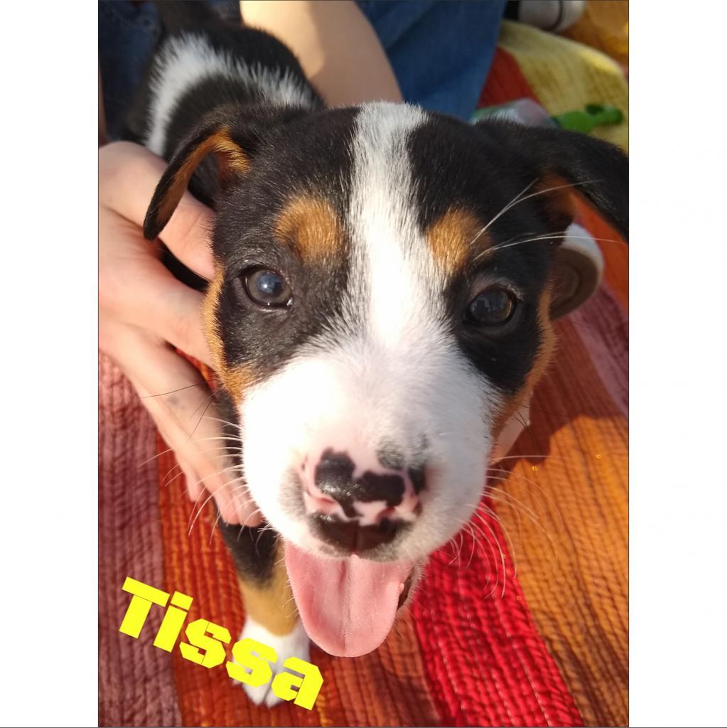 Photo of Tissa