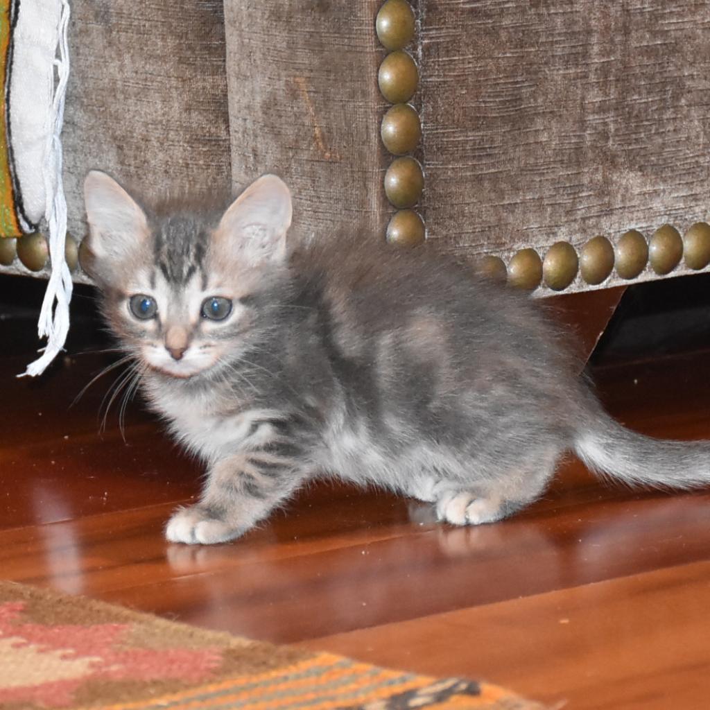 Photo of Poppy 1
