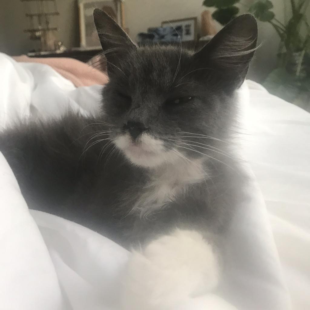 Photo of Elsie