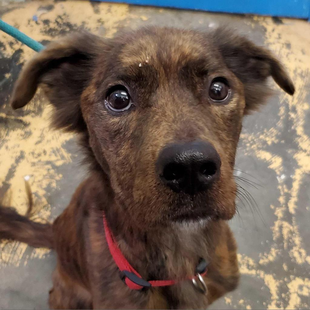 https://www.shelterluv.com/sites/default/files/animal_pics/4980/2020/12/21/10/20201221101255.png