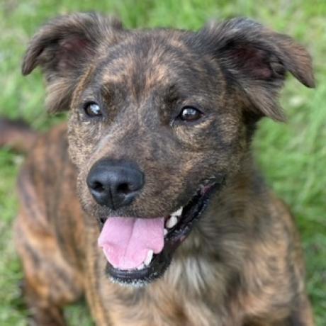 https://www.shelterluv.com/sites/default/files/animal_pics/4980/2021/04/10/08/20210410085424.png