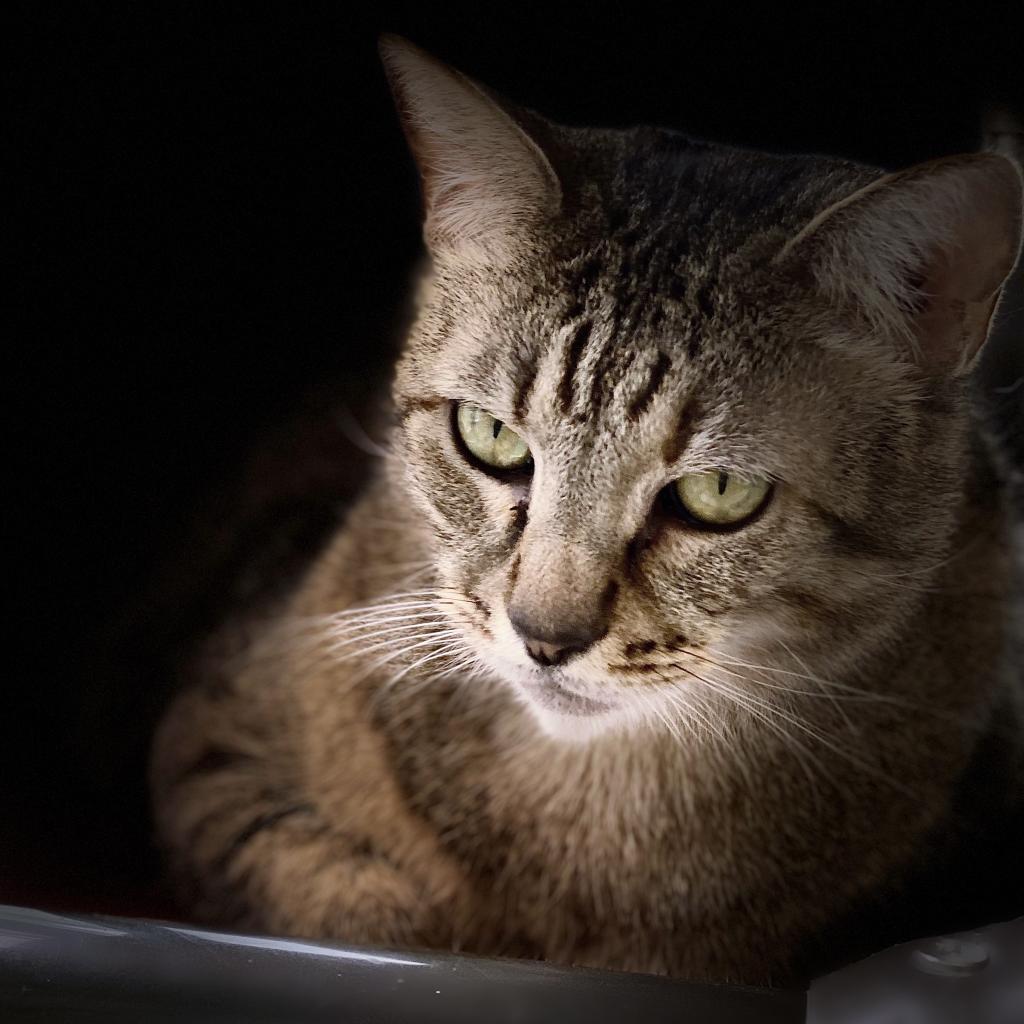 https://www.shelterluv.com/sites/default/files/animal_pics/4980/2021/04/19/06/20210419063831.png
