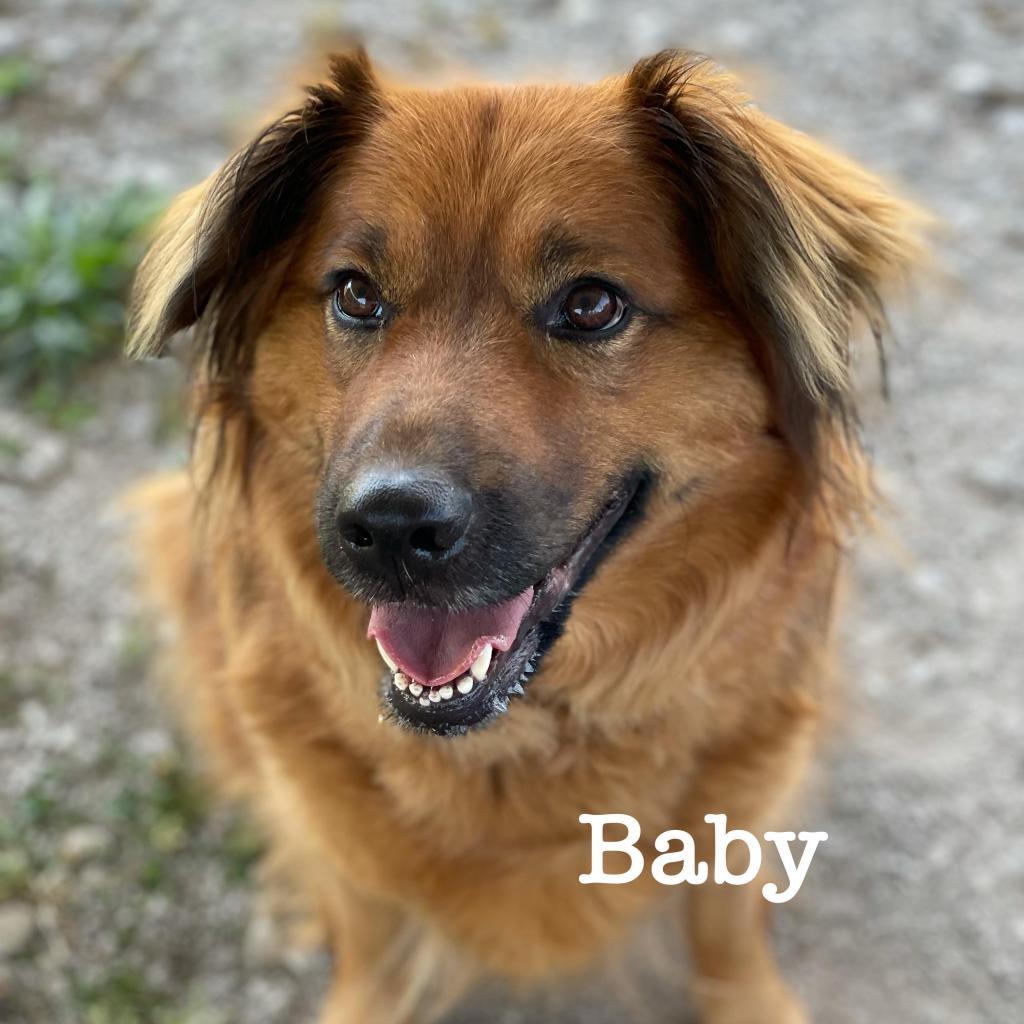 https://www.shelterluv.com/sites/default/files/animal_pics/4980/2021/05/26/09/20210526091153.png