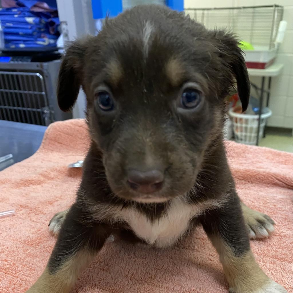 https://www.shelterluv.com/sites/default/files/animal_pics/4980/2021/05/27/14/20210527140248.png