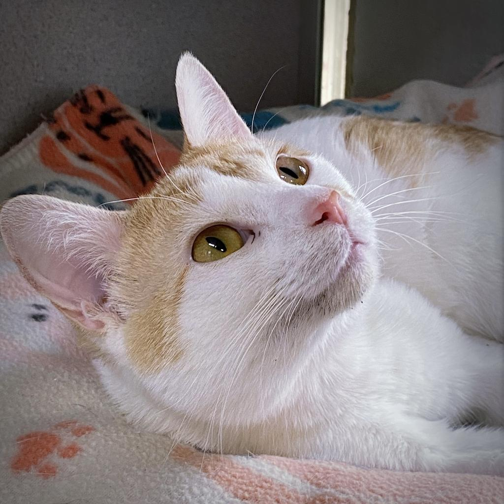 https://www.shelterluv.com/sites/default/files/animal_pics/4980/2021/05/28/12/20210528120648.png