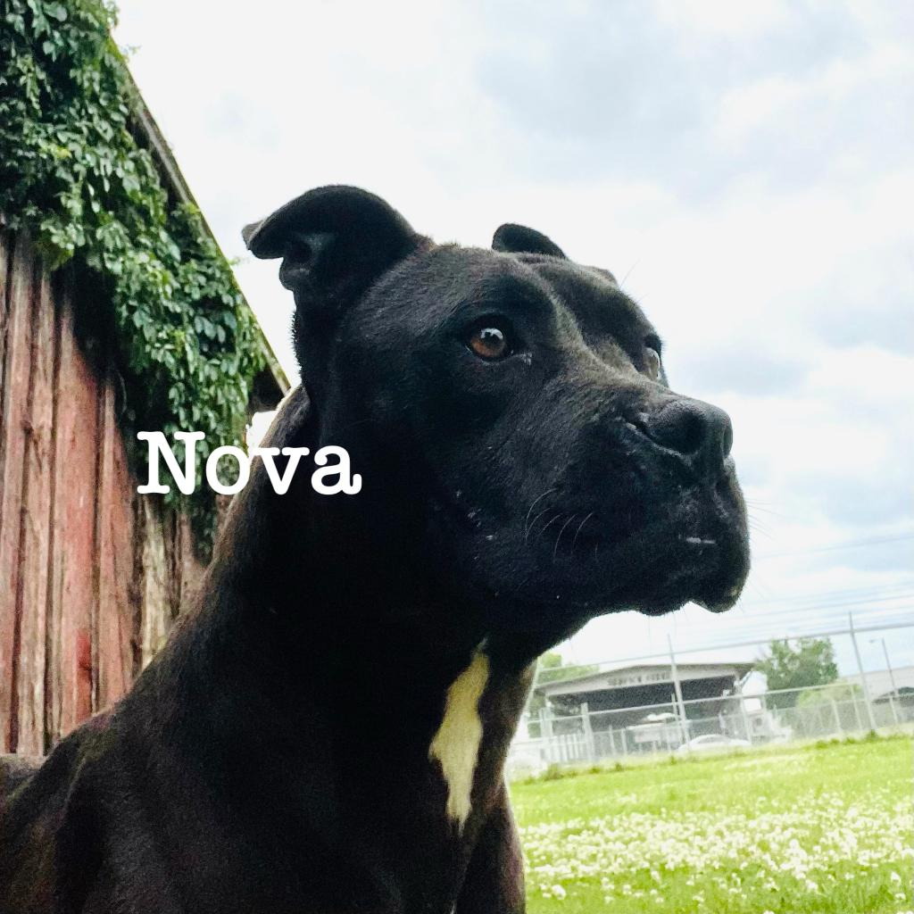 https://www.shelterluv.com/sites/default/files/animal_pics/4980/2021/05/30/12/20210530124935.png