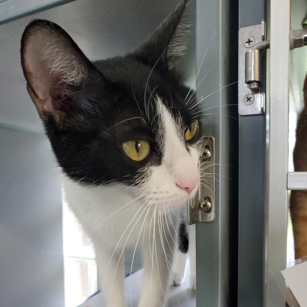 https://www.shelterluv.com/sites/default/files/animal_pics/4980/2021/06/07/11/20210607115721.png