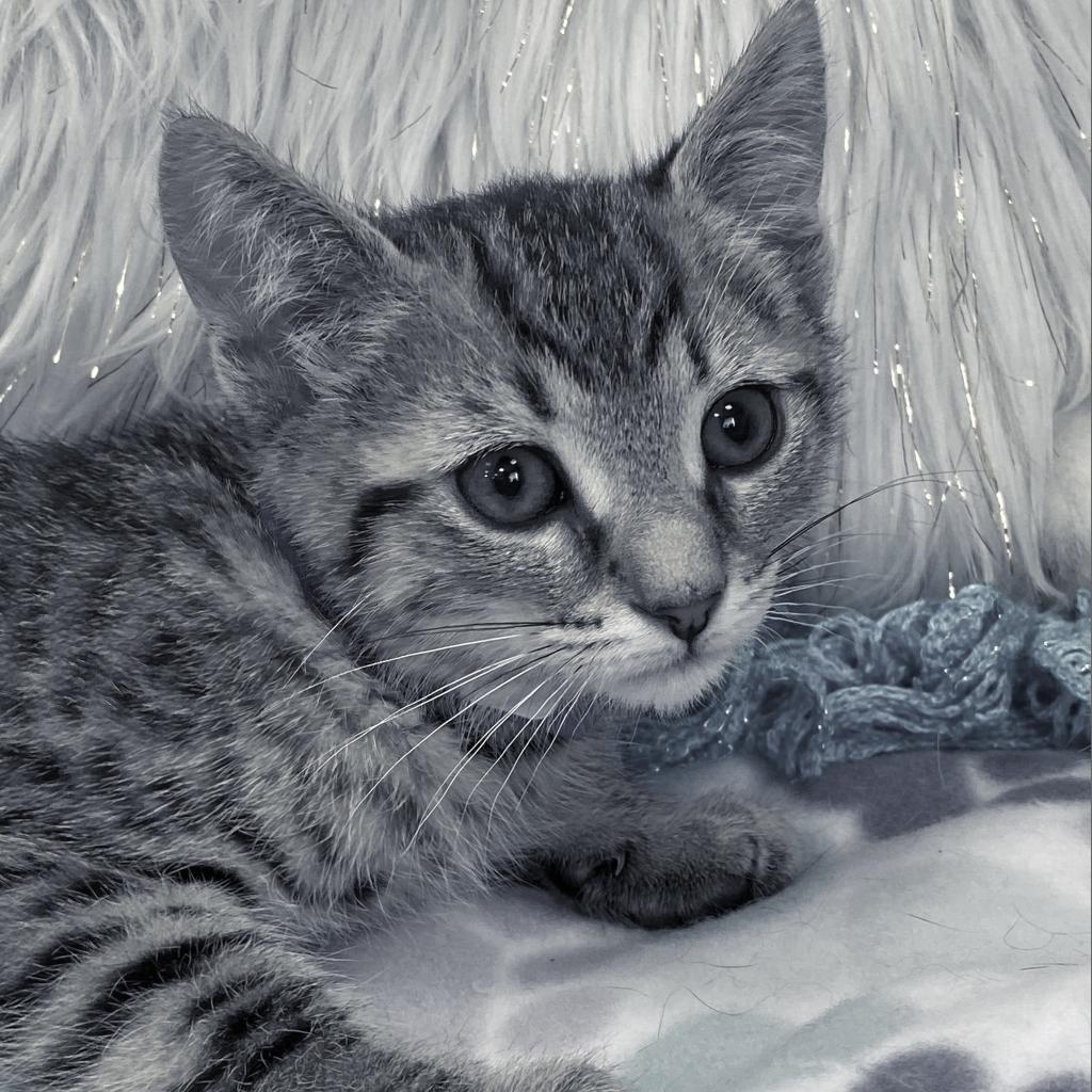 https://www.shelterluv.com/sites/default/files/animal_pics/4980/2021/06/14/11/20210614112204.png