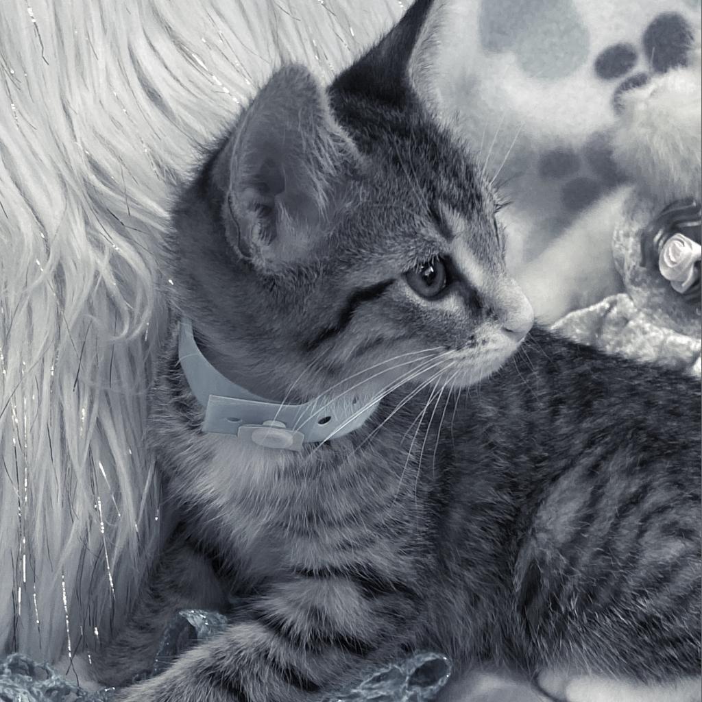 https://www.shelterluv.com/sites/default/files/animal_pics/4980/2021/06/14/11/20210614113042.png