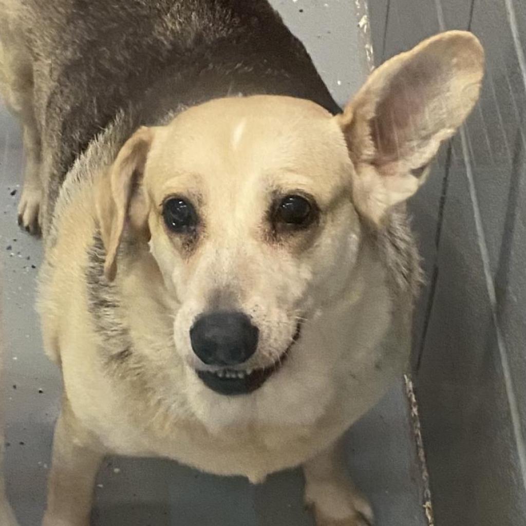 https://www.shelterluv.com/sites/default/files/animal_pics/4980/2021/07/02/13/20210702130827_0.png