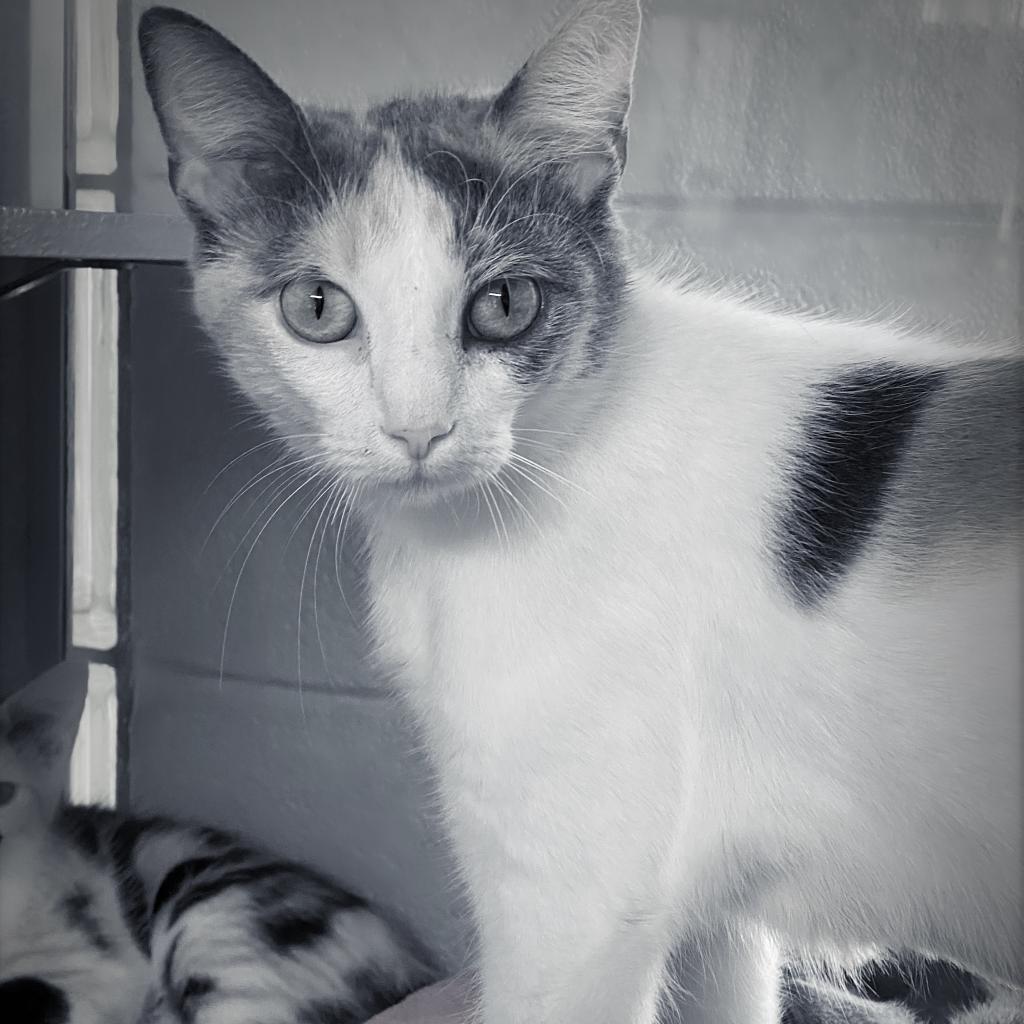 https://www.shelterluv.com/sites/default/files/animal_pics/4980/2021/07/06/06/20210706064813.png
