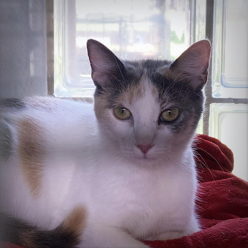 https://www.shelterluv.com/sites/default/files/animal_pics/4980/2021/07/06/06/20210706065052.png