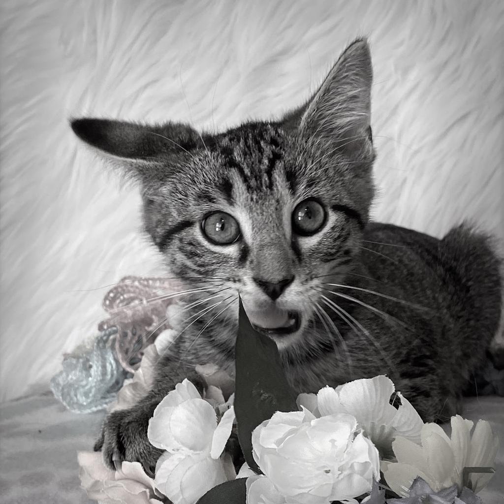 https://www.shelterluv.com/sites/default/files/animal_pics/4980/2021/07/16/09/20210716092847.png