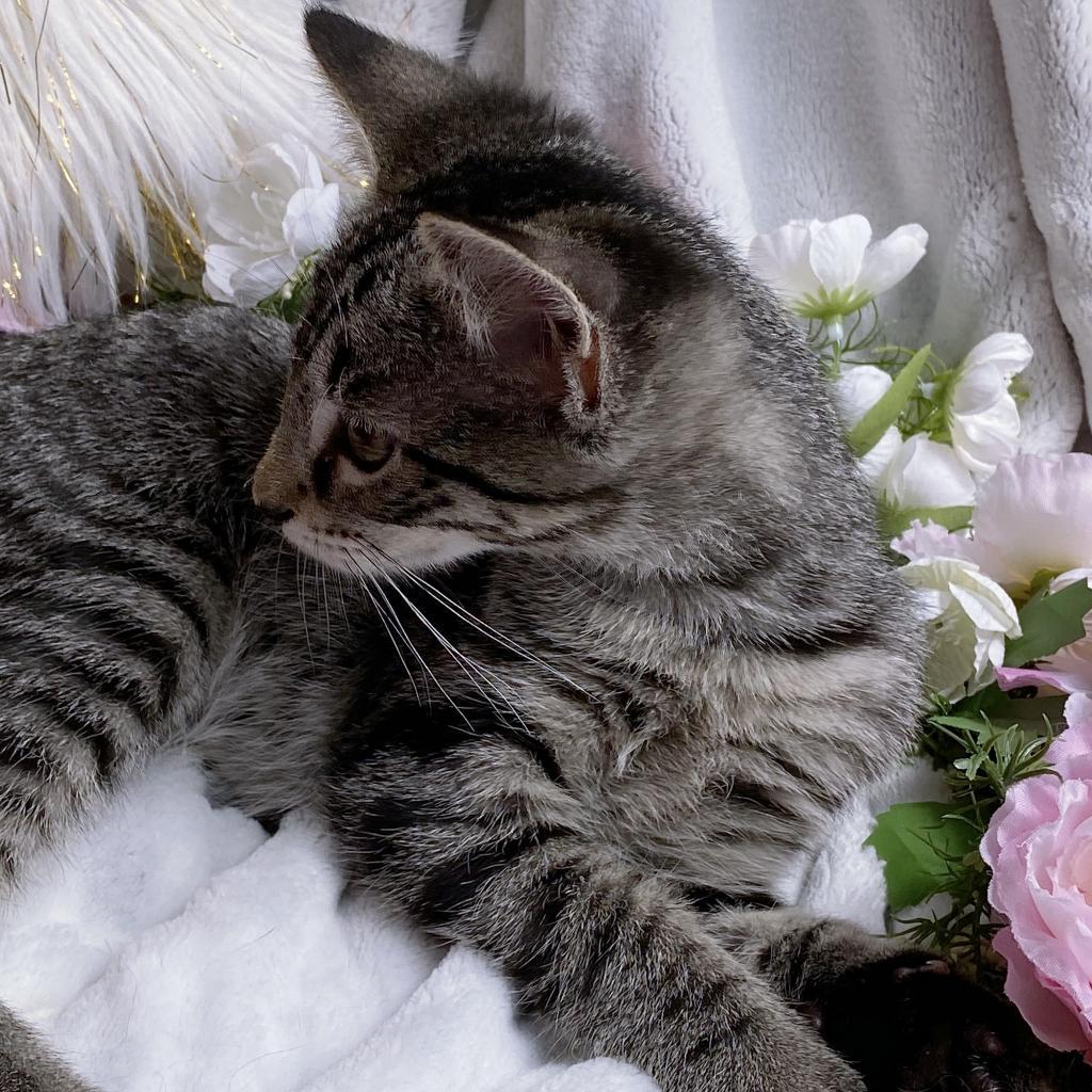 https://www.shelterluv.com/sites/default/files/animal_pics/4980/2021/07/16/09/20210716092920.png