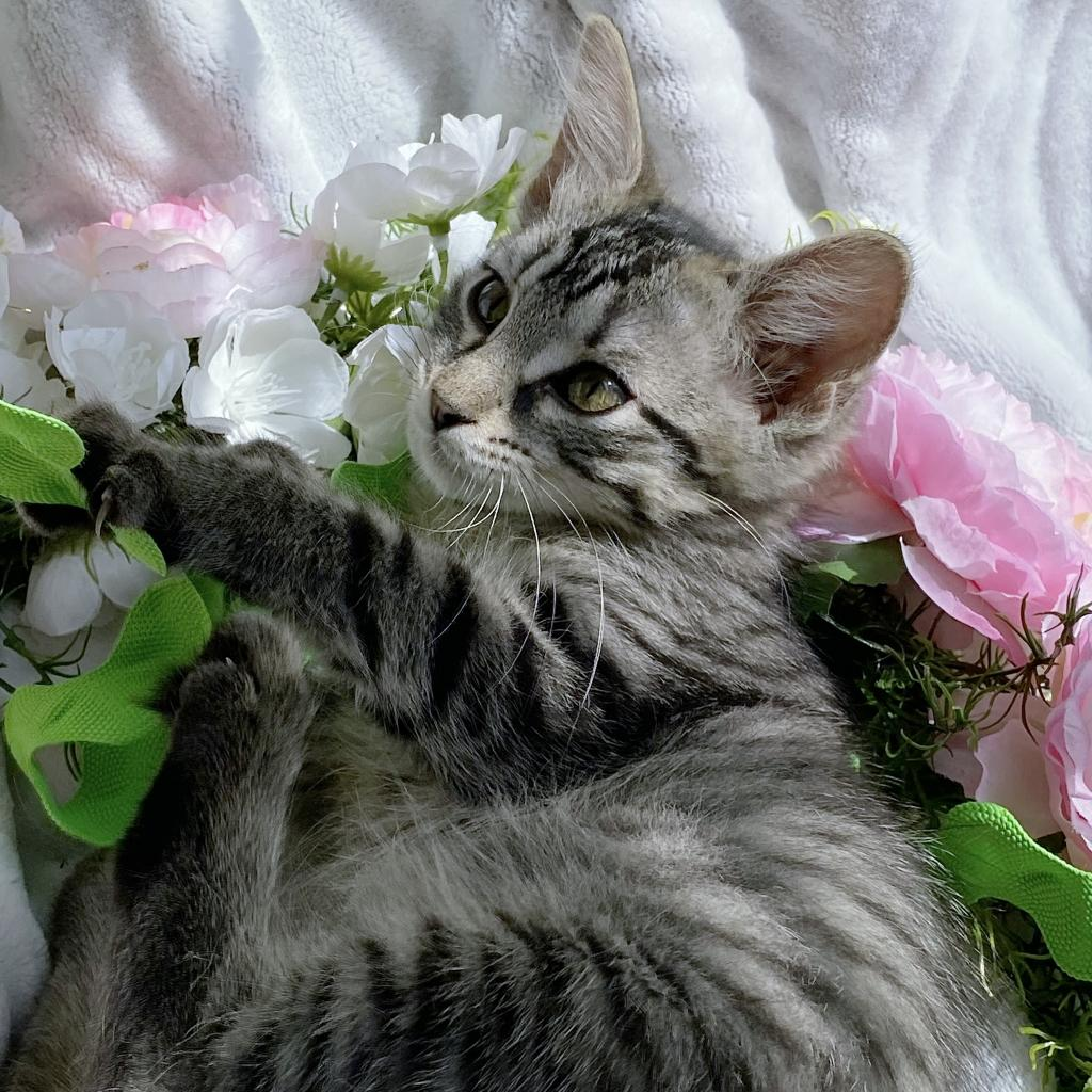 https://www.shelterluv.com/sites/default/files/animal_pics/4980/2021/07/16/09/20210716095943.png