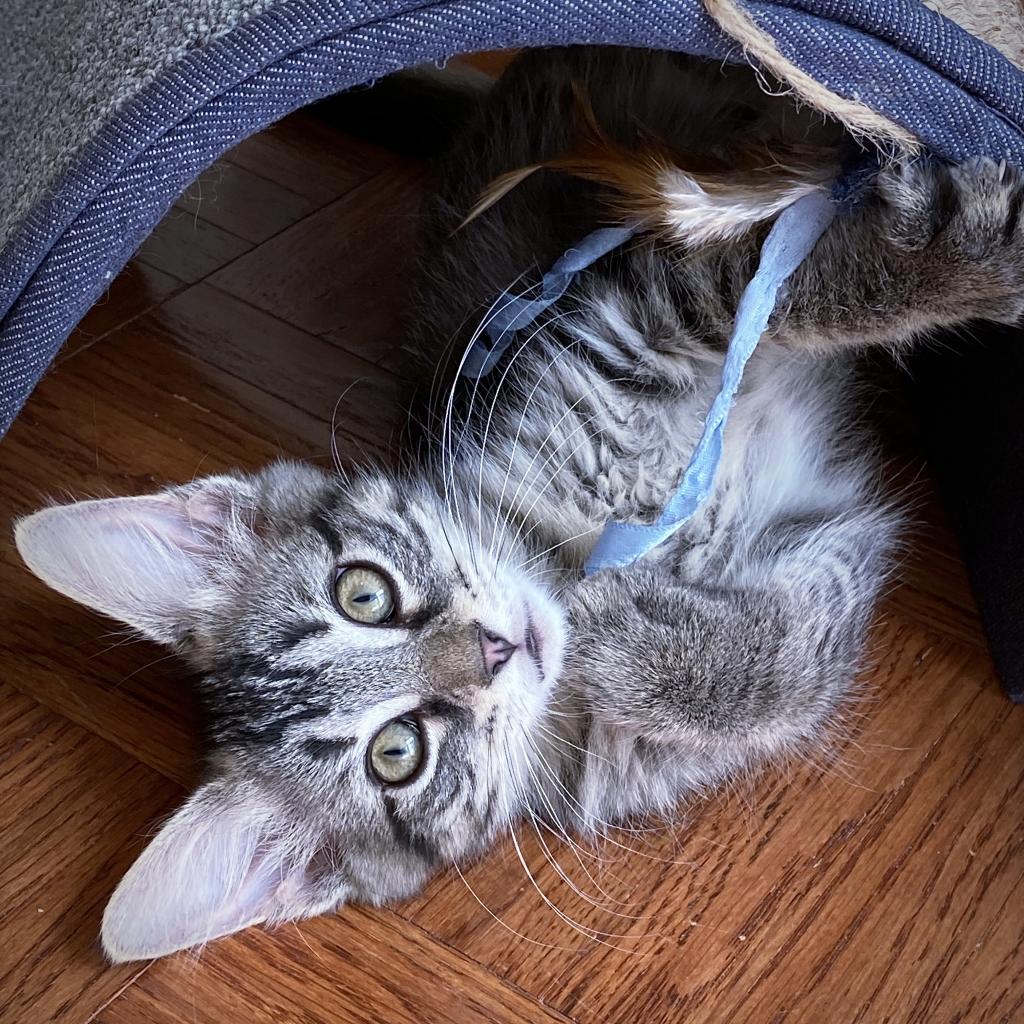 https://www.shelterluv.com/sites/default/files/animal_pics/4980/2021/07/16/10/20210716100053.png