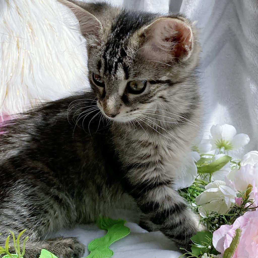 https://www.shelterluv.com/sites/default/files/animal_pics/4980/2021/07/16/10/20210716100137.png
