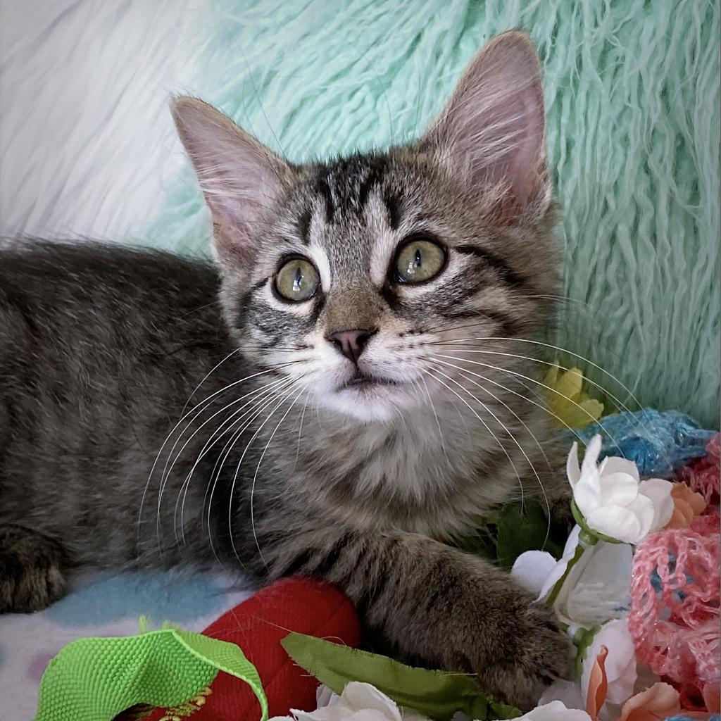 https://www.shelterluv.com/sites/default/files/animal_pics/4980/2021/07/16/10/20210716100157.png