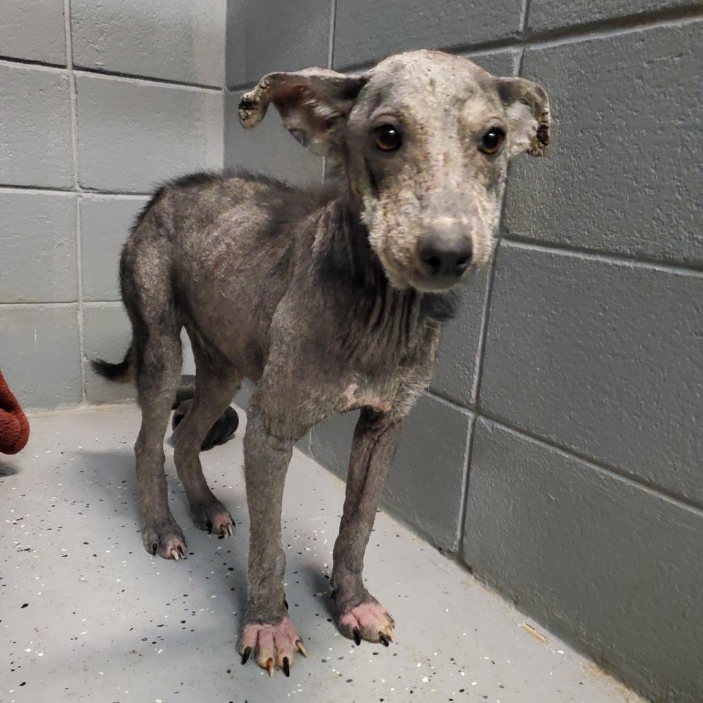 https://www.shelterluv.com/sites/default/files/animal_pics/4980/2021/08/30/11/20210830114450.png