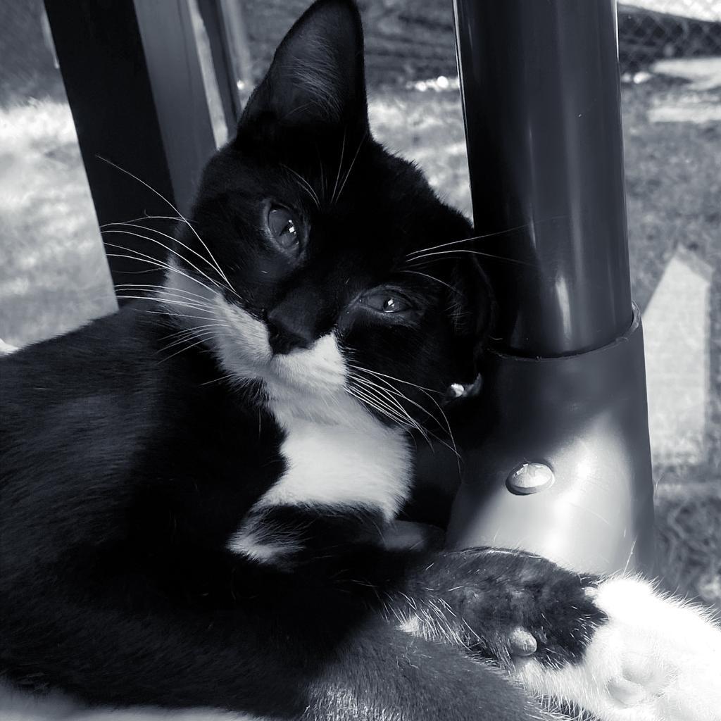 https://www.shelterluv.com/sites/default/files/animal_pics/4980/2021/09/05/07/20210905072345.png