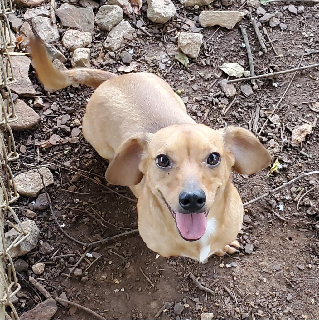 https://www.shelterluv.com/sites/default/files/animal_pics/4980/2021/09/08/08/20210908085904.png