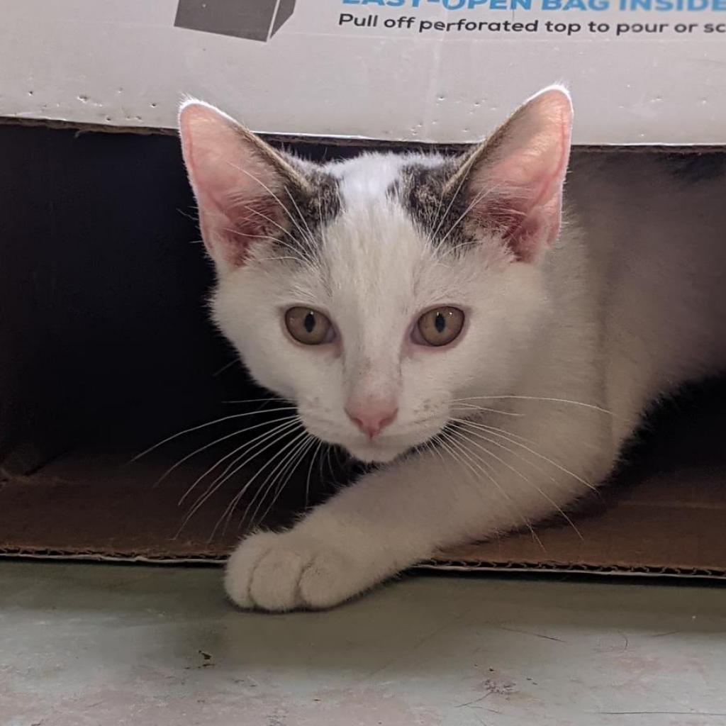 https://www.shelterluv.com/sites/default/files/animal_pics/4980/2021/09/15/11/20210915113228_0.png