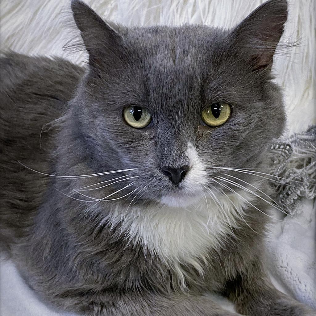 https://www.shelterluv.com/sites/default/files/animal_pics/4980/2021/10/01/06/20211001064614.png