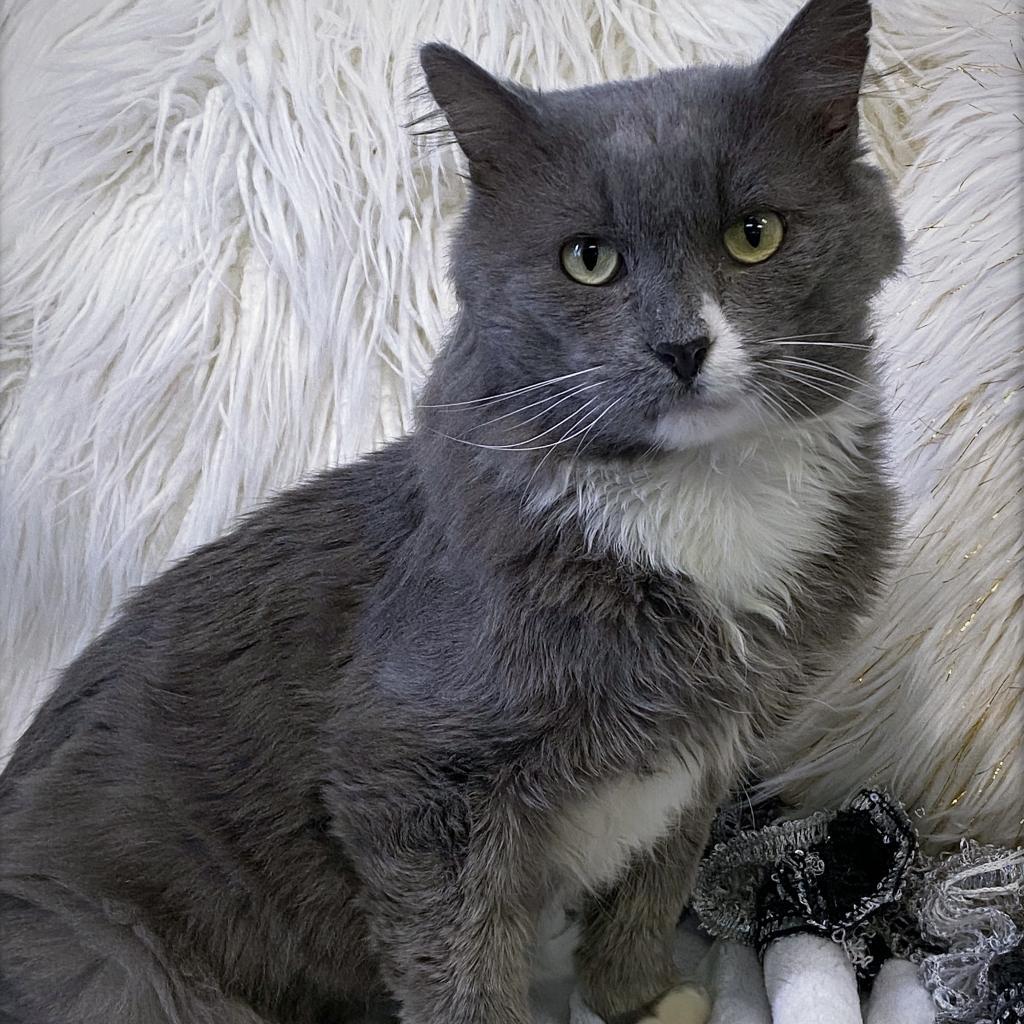 https://www.shelterluv.com/sites/default/files/animal_pics/4980/2021/10/01/06/20211001064638.png