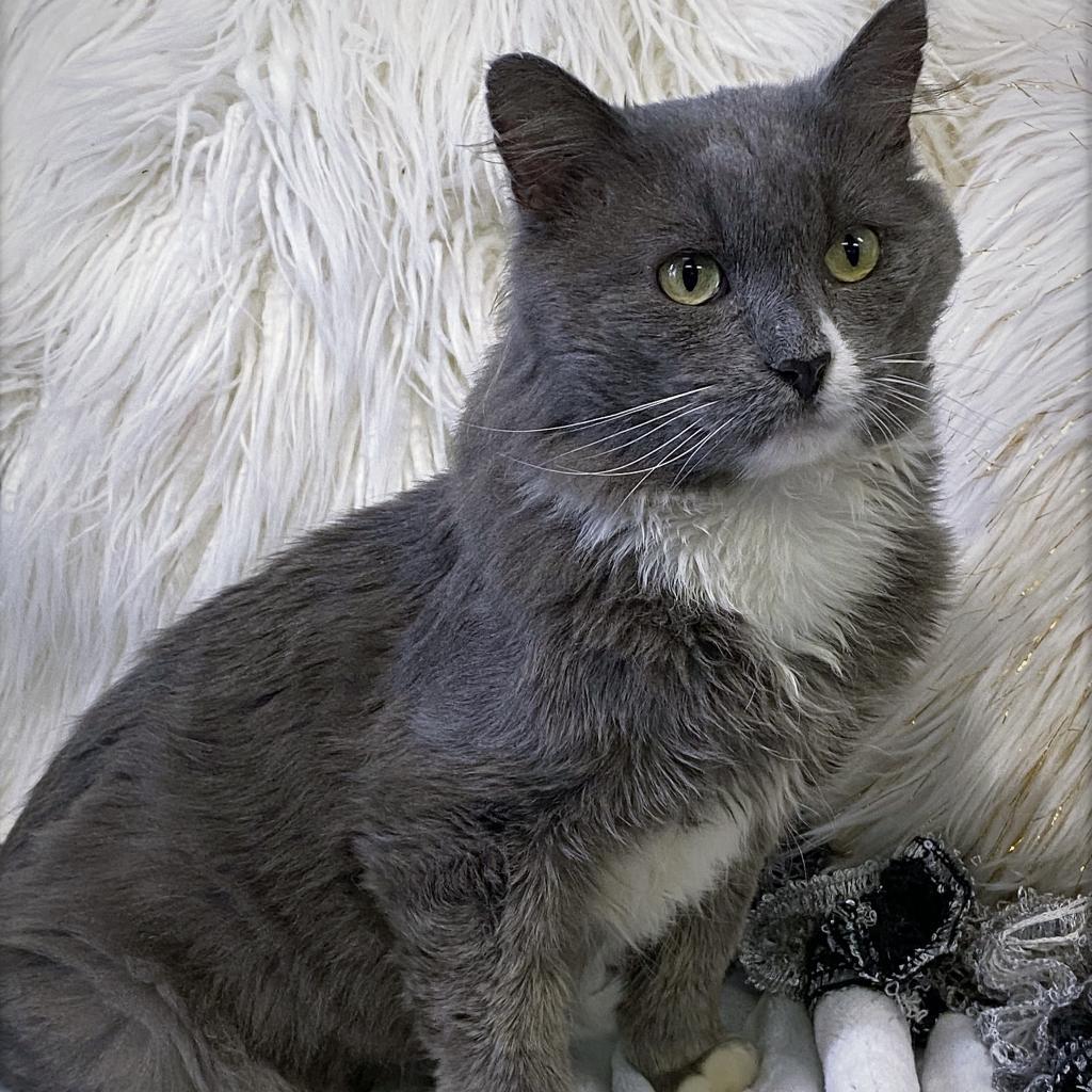 https://www.shelterluv.com/sites/default/files/animal_pics/4980/2021/10/01/06/20211001064907.png
