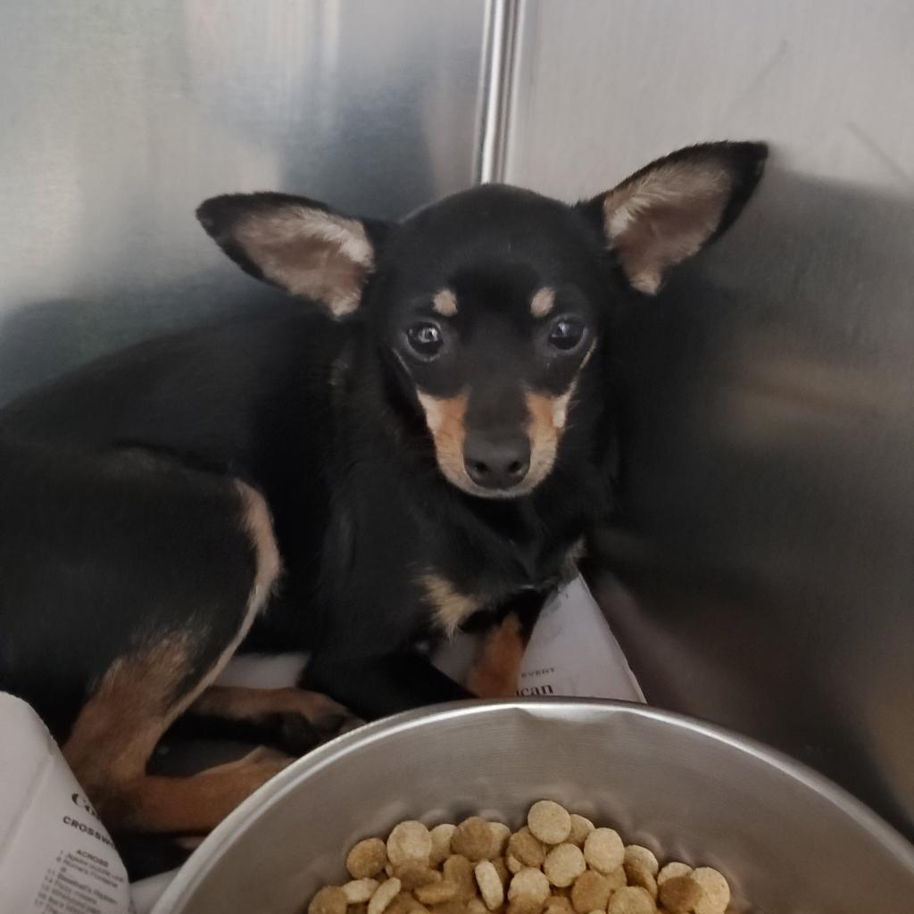 https://www.shelterluv.com/sites/default/files/animal_pics/4980/2021/10/03/10/20211003102144.png