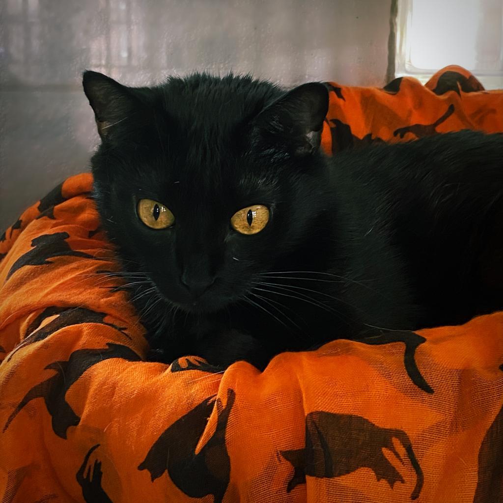 https://www.shelterluv.com/sites/default/files/animal_pics/4980/2021/10/06/10/20211006104310.png
