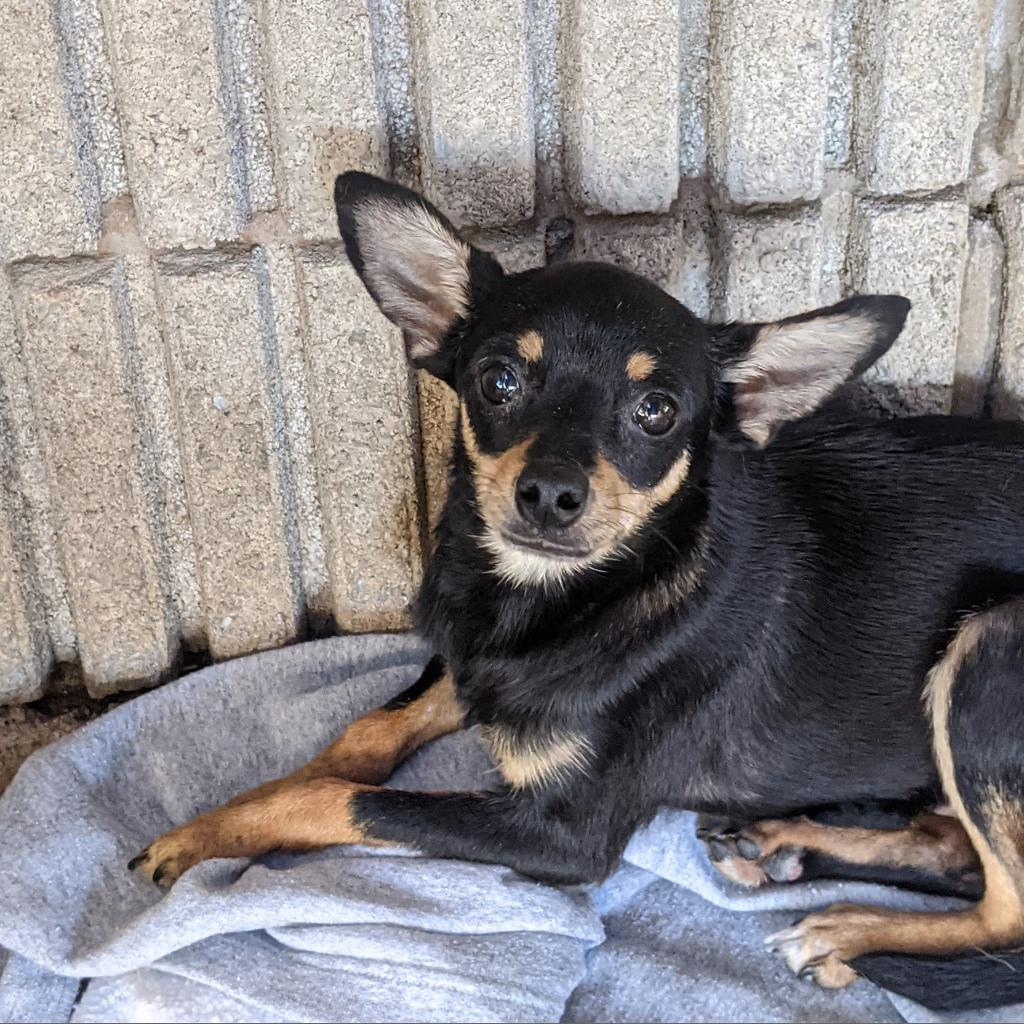 https://www.shelterluv.com/sites/default/files/animal_pics/4980/2021/10/09/10/20211009103521.png