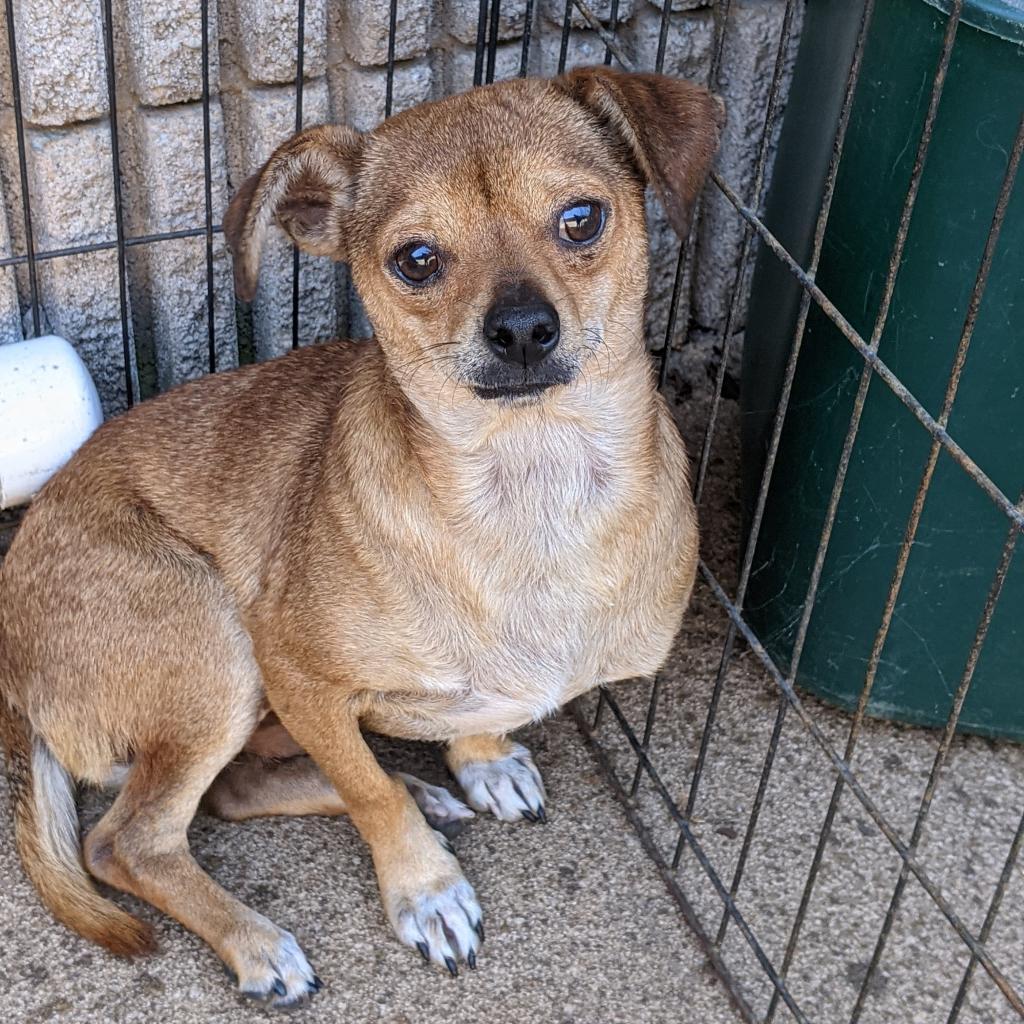 https://www.shelterluv.com/sites/default/files/animal_pics/4980/2021/10/09/10/20211009103628.png