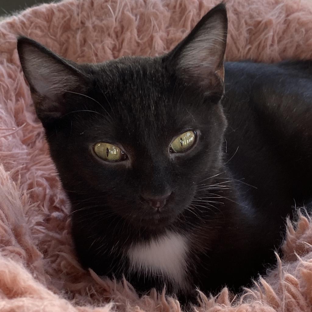 https://www.shelterluv.com/sites/default/files/animal_pics/4980/2021/10/14/12/20211014122939.png