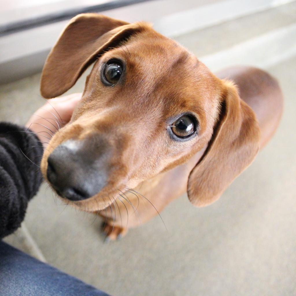 Dog Training Lynchburg Va