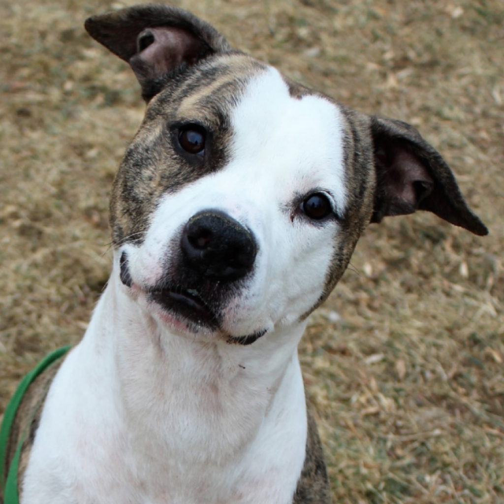 Stardust Building Supplies >> Adoptable Dogs   Lynchburg Humane Society   Page 3187885