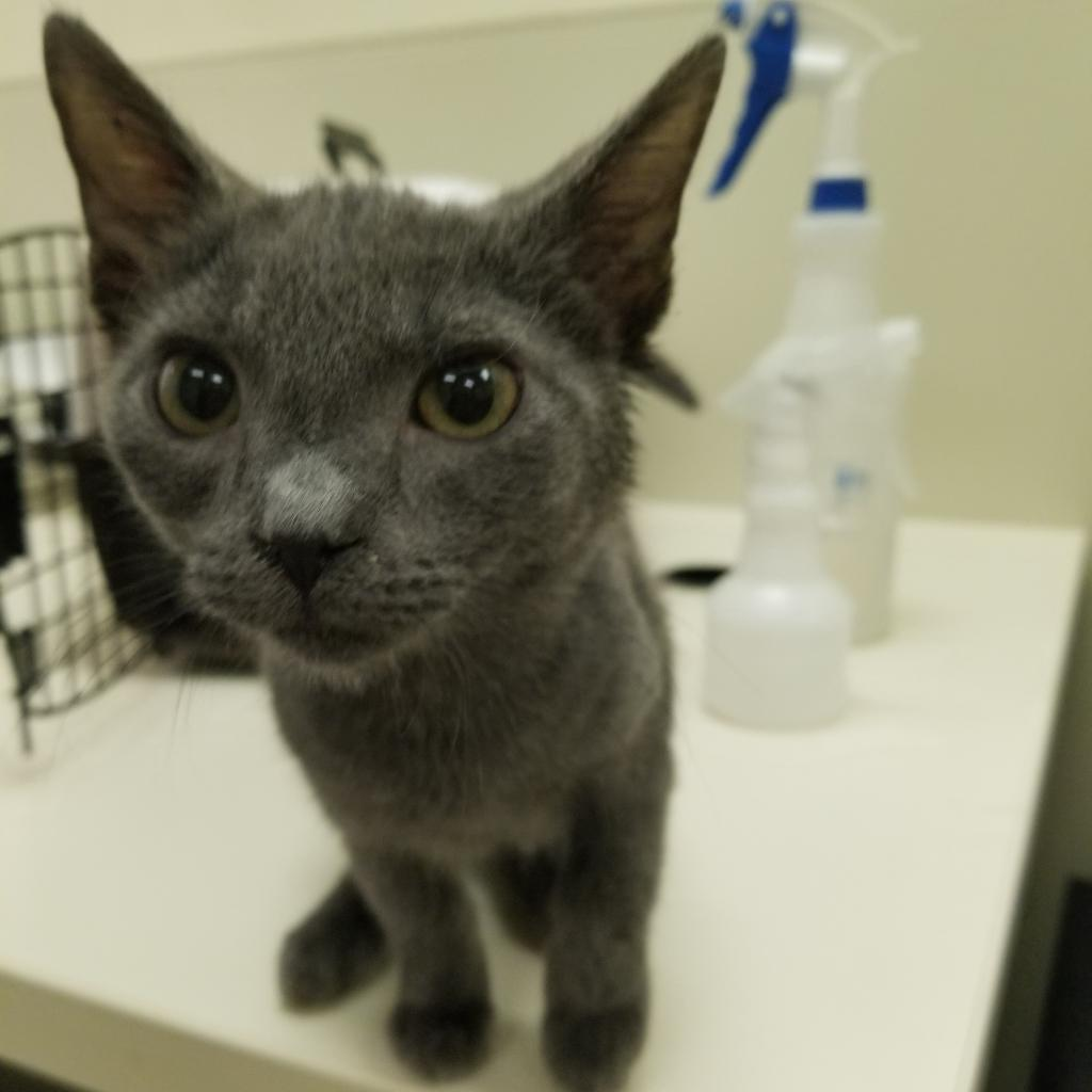 Adoptable Cats   Lynchburg Humane Society