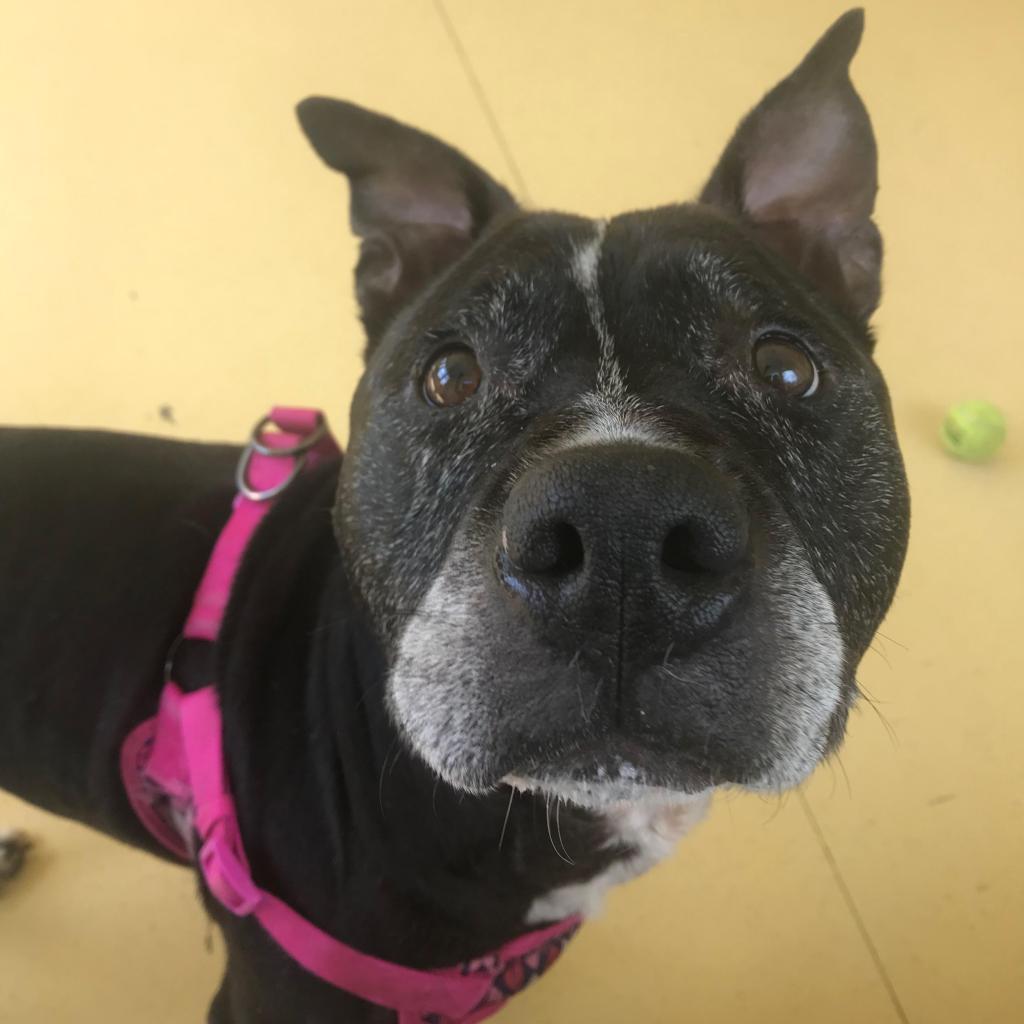 Adoptable Dogs | Lynchburg Humane Society