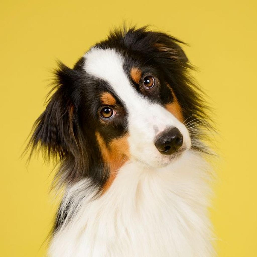 Bailey the Dog