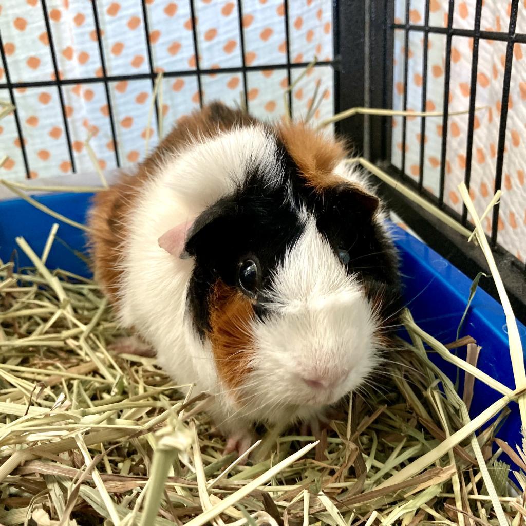 Reggie the Rabbit