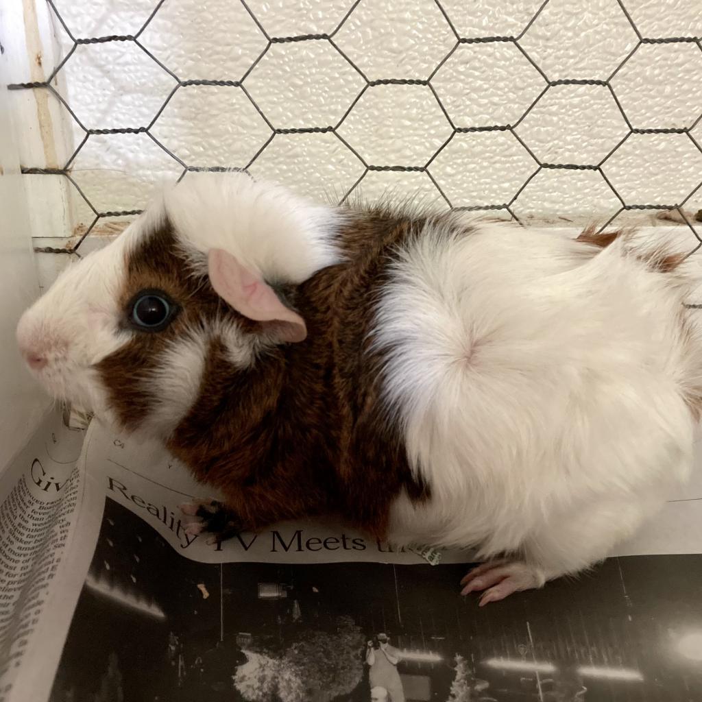 Patrick the Rabbit