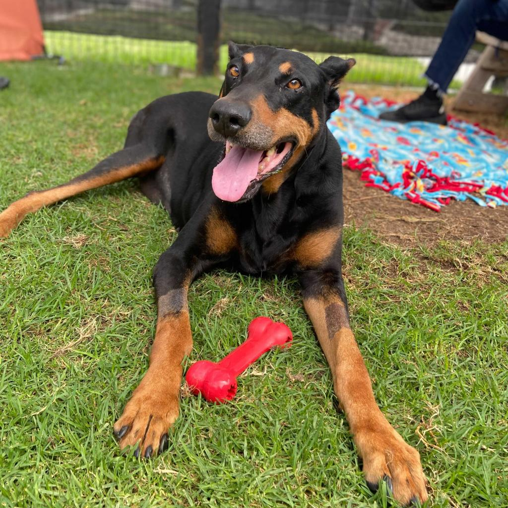 Enzo the Dog