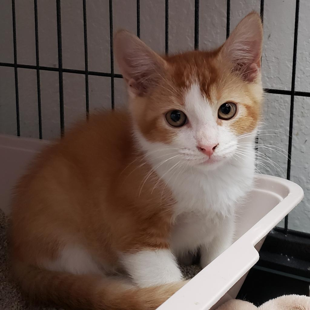 Buttercup the Cat