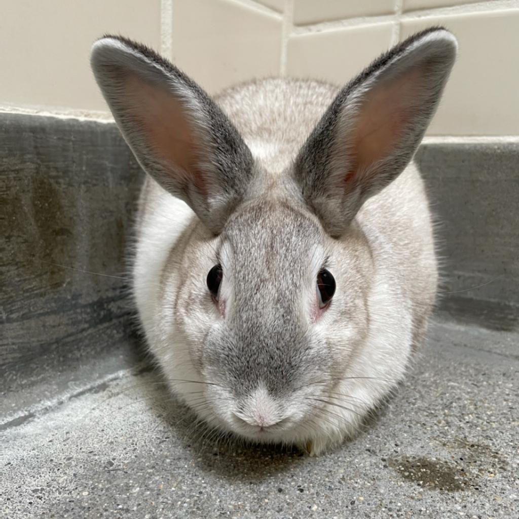 Blossom the Rabbit