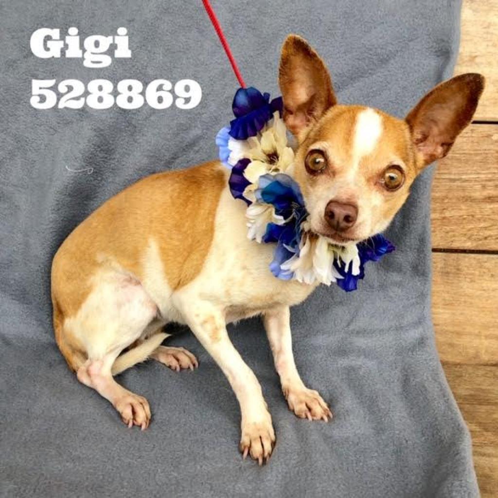 Adopt a Dog – San Antonio Pets Alive!