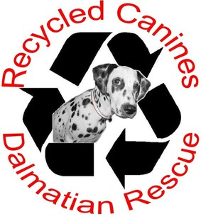 Recycled Canines Dalmatian Rescue