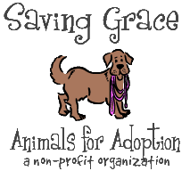 Saving Grace Animals for Adoption