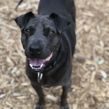 Main photo of Duke